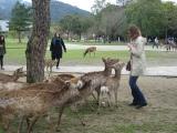 Deer-dodging in Nara